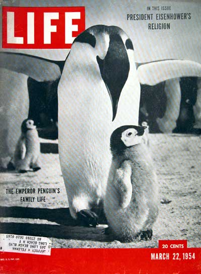 emperor penguin research paper